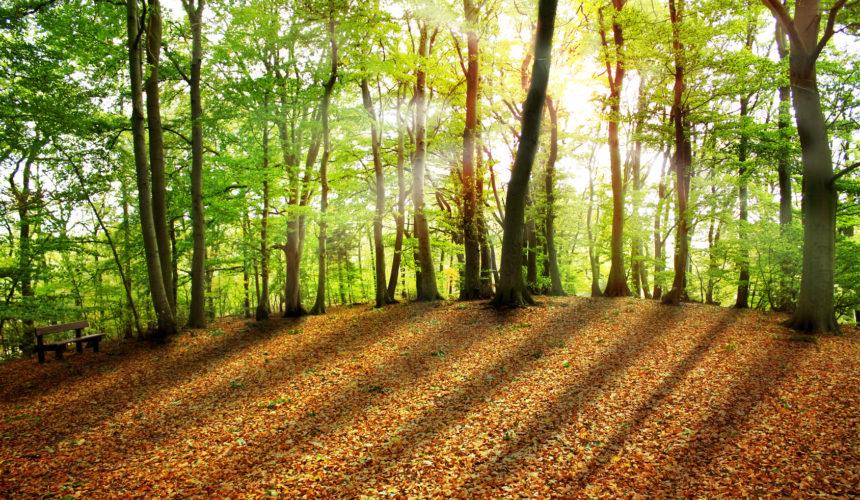 Waldbaden – der Biophilia-Effekt