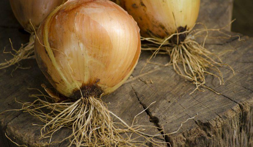 Die Zwiebel als gesundes Nahrungsmittel
