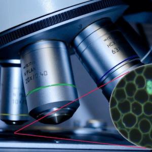 Bamberg – Fachseminar Dunkelfeldmikroskopie