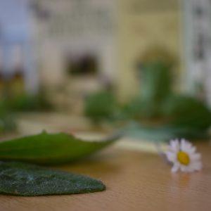 Heilpflanzen – ein Schatz für Therapeuten wie auch den Hausgebrauch