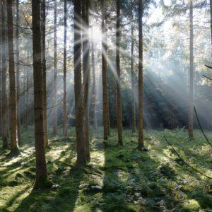Kraftquelle Natur – Positive Wirkung auf Körper und Geist