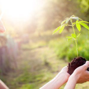 Wir pflanzen für jede Anmeldung einen Baum!