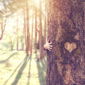 Sanfte Medizin der Bäume: Die Heilkraft des Dr. med. Baum