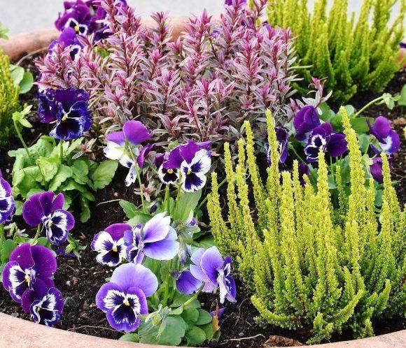Was ist eigentlich Gartentherapie?
