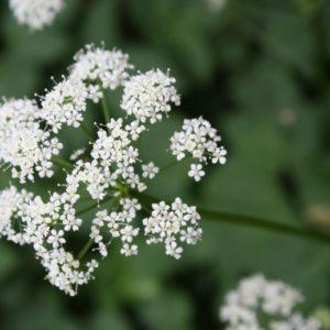 Rezept: Frühlingshafter Wildkräutersalat