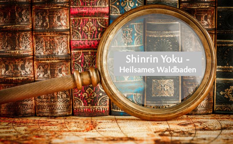 Buchvorstellung: Shinrin Yoku – Heilsames Waldbaden
