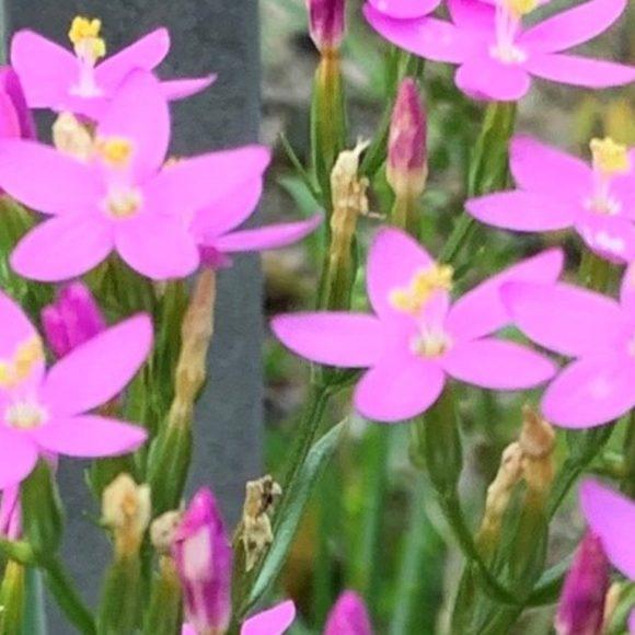 Spannende Einblicke in die Welt der Pflanzen: Kräuterführung im Botanischen Garten Berlin