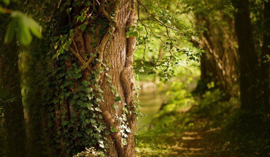 Vom Wald lernen – Das soziale Netzwerk der Bäume